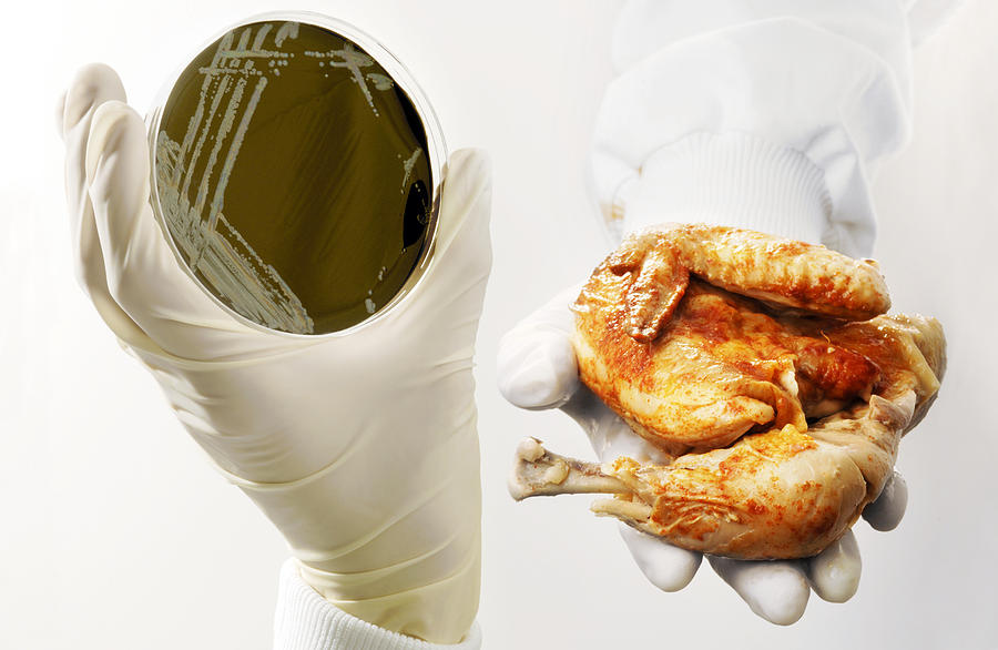 Campylobacter Food Poisoning Photograph By Tim Vernon Lth Nhs