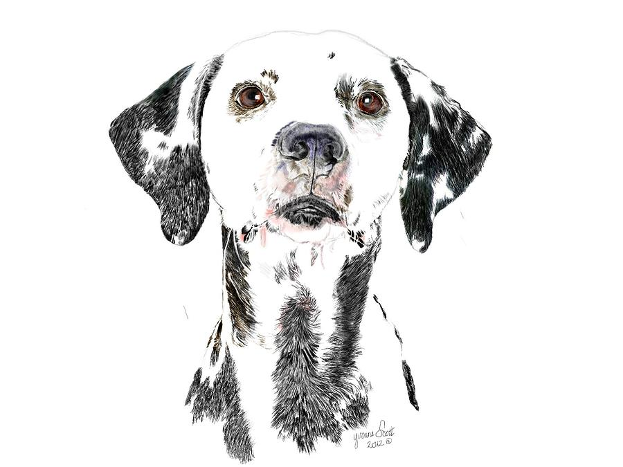 Dalmation Digital Art - Can You Spot Me by Yvonne Scott