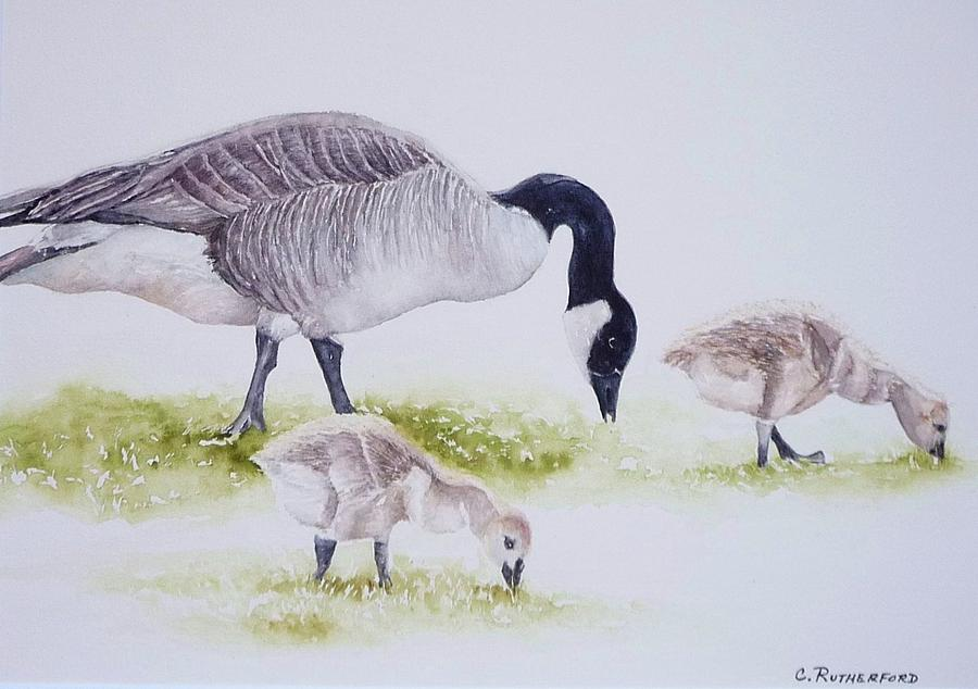 Canadian Geese Painting - Canadian Aliens by Claudia Rutherford