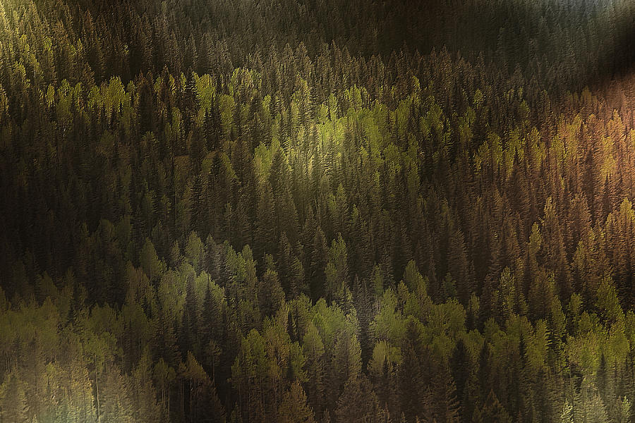 Canada Photograph - Canadian Forest - The Woods Are Lovely Dark And Deep by Christine Till