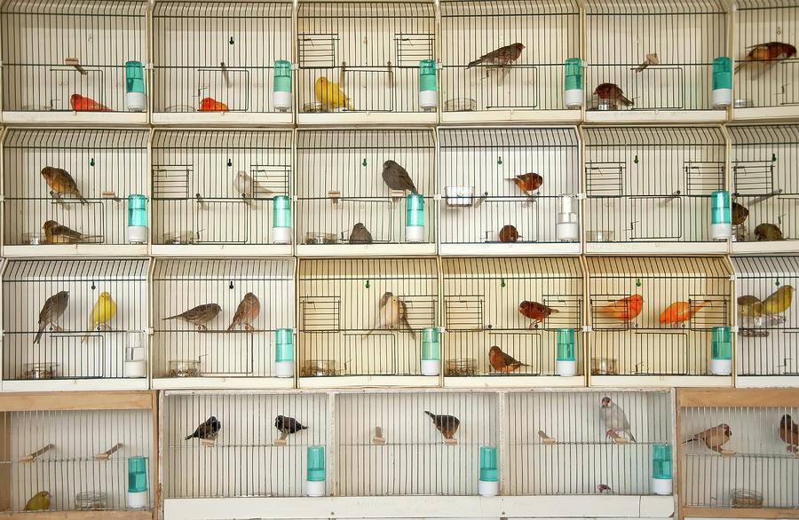 Horizontal Photograph - Canary Birds by Carlo A