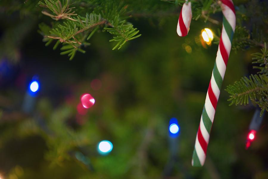 Candy Photograph - Candy Cane On Tree by Carson Ganci