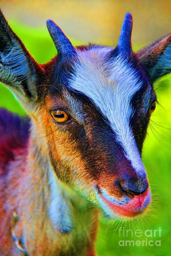 Candy Goat Photograph - Candy Goat by Mariola Bitner