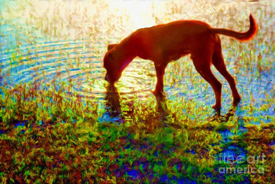 Canelo Photograph - Canelo Drinking Water By The Lake by John  Kolenberg