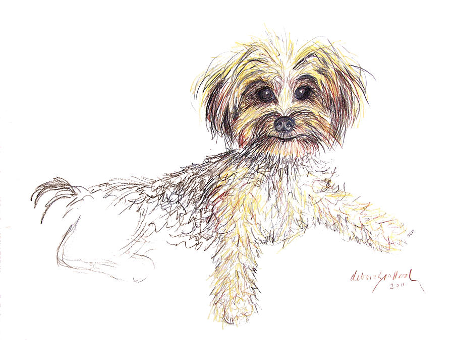 Dog Drawing - Canine Cutie by Deborah Willard