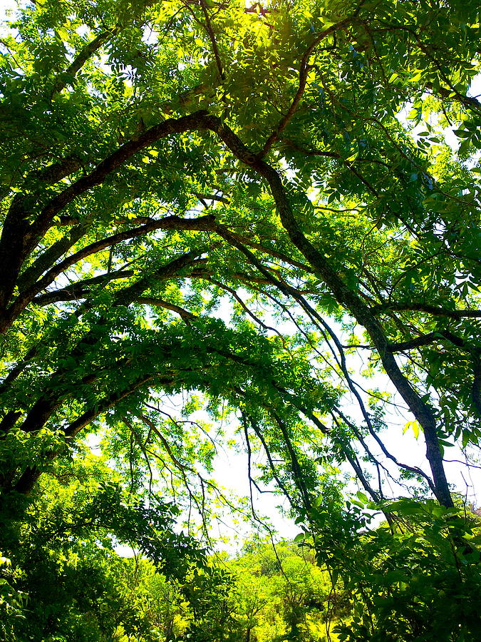 Canopy Photograph by Amber Hennessey