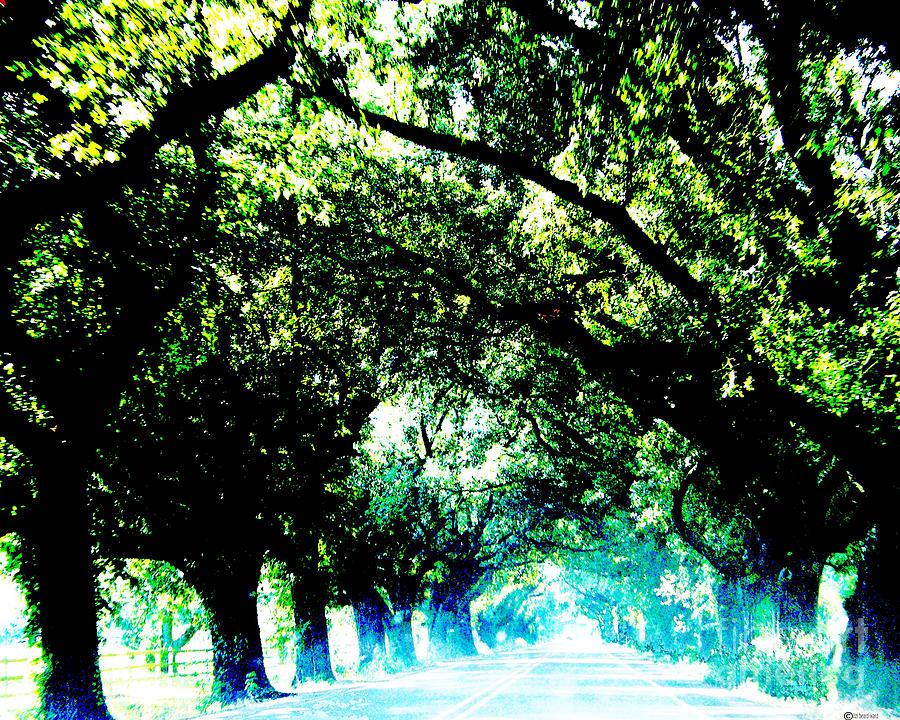 Live Oak Photograph - Canopy by Lizi Beard-Ward