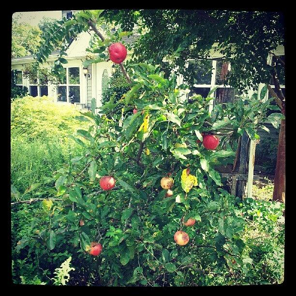 Cant Wait For Apple Picking Season Photograph by Chelsea Neri