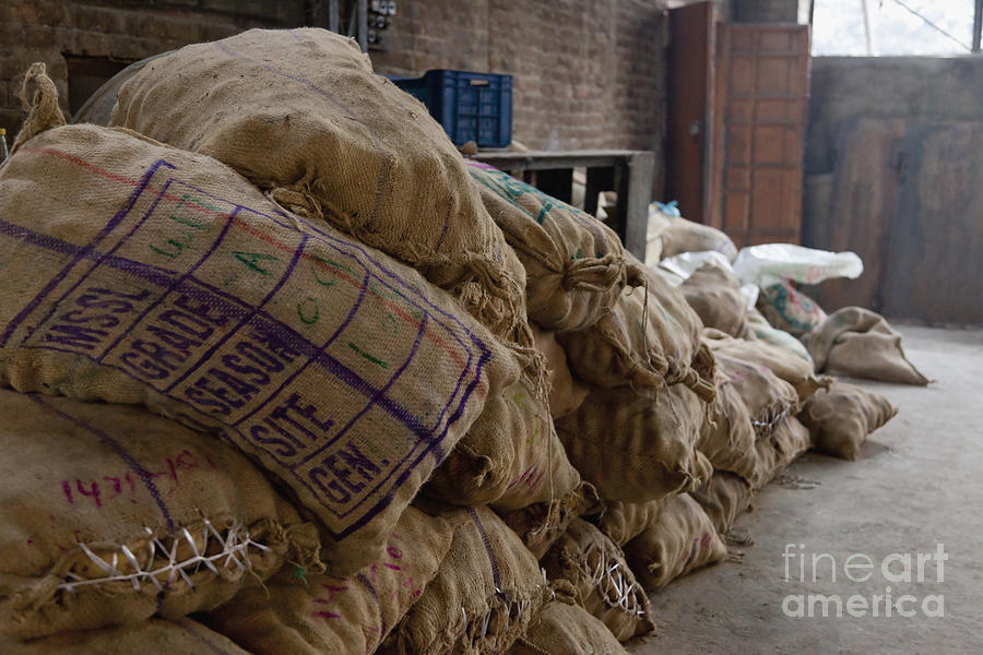 Agriculture Photograph - Canvas Bags Holding Foodstuffs by Inti St. Clair
