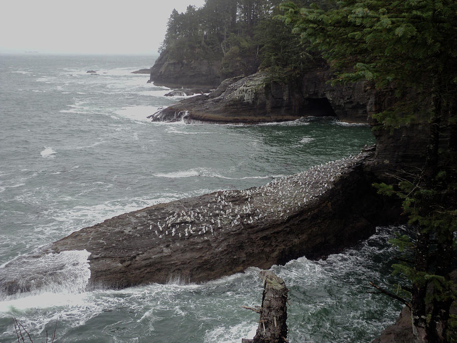 Cape Flattery Photograph - Cape Flattery Shoreline by Fred Russell