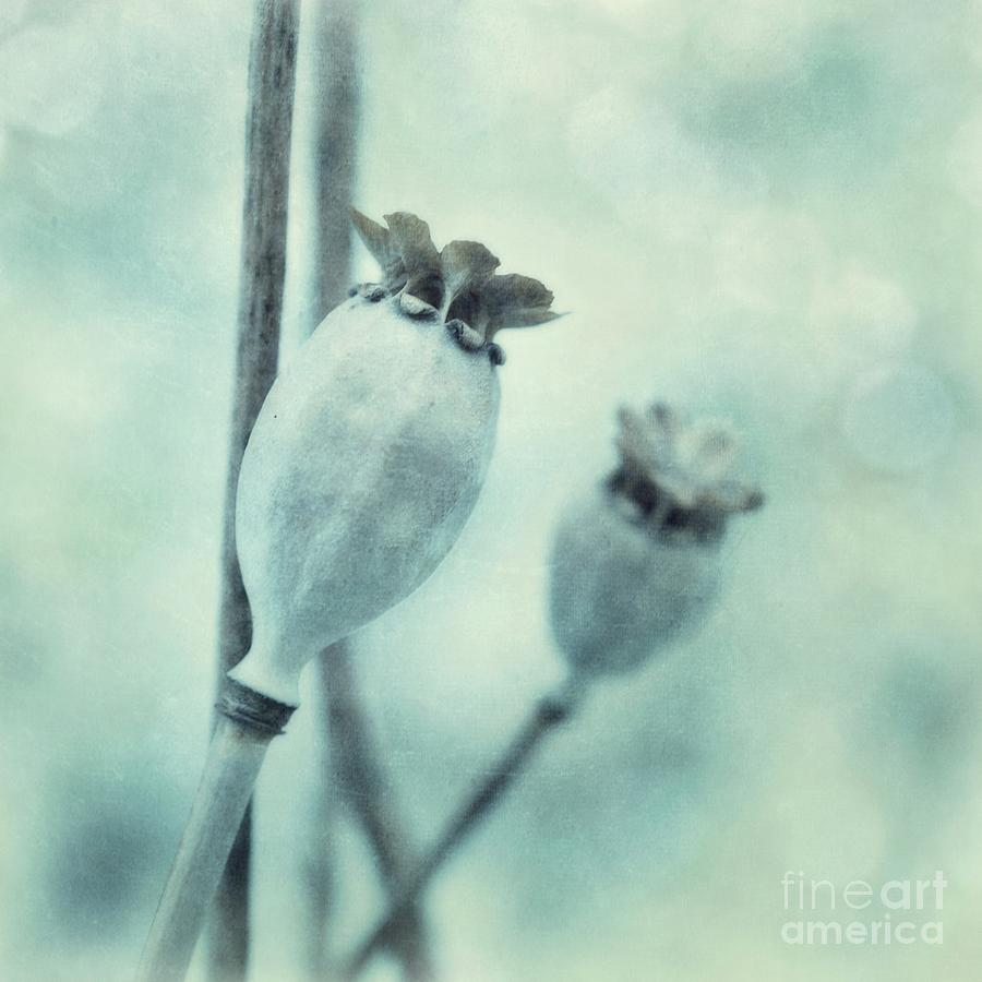Blue Photograph - Capsule Series by Priska Wettstein