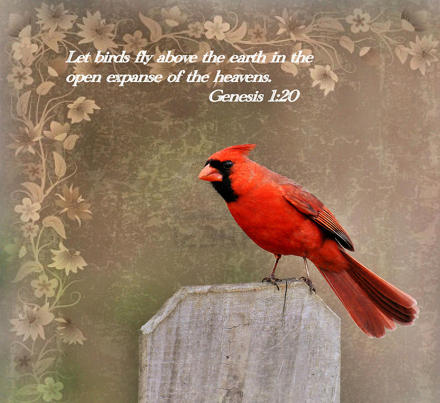 Cardinal And Scripture Photograph By Todd Hostetter