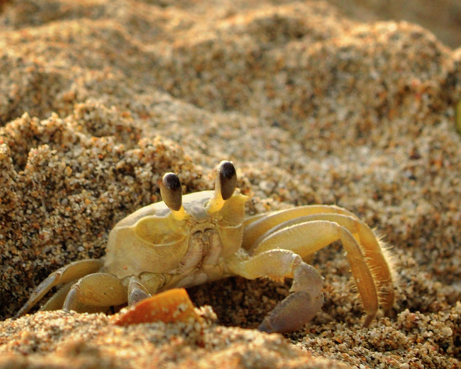 St Lucia Photograph - Caribbean Crab by J R Baldini M Photog Cr