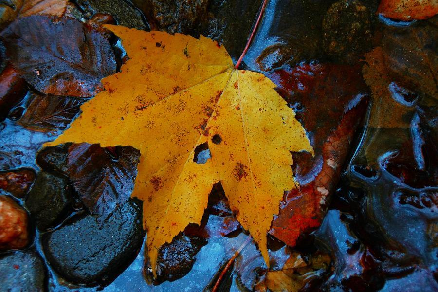 Maple Leaf Photograph - Carolina Blue Reflections by Christine Annas