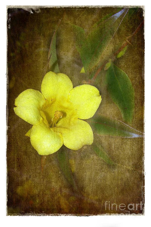 Texture Photograph - Carolina Jessamine by Judi Bagwell