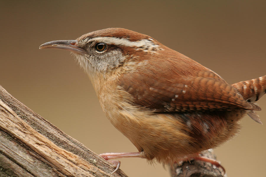 wrens chat Book your holiday at jenny wrens - quality self-catering accommodation in  hampshire.