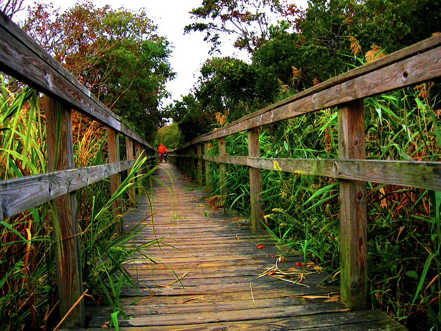 Boardwalk Photograph - Carrituck Perspective by Ed Golden