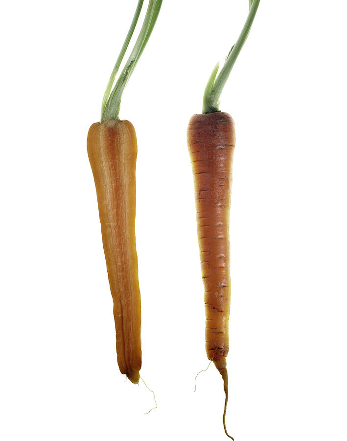 Fruit Photograph - Carrot by Nathaniel Kolby