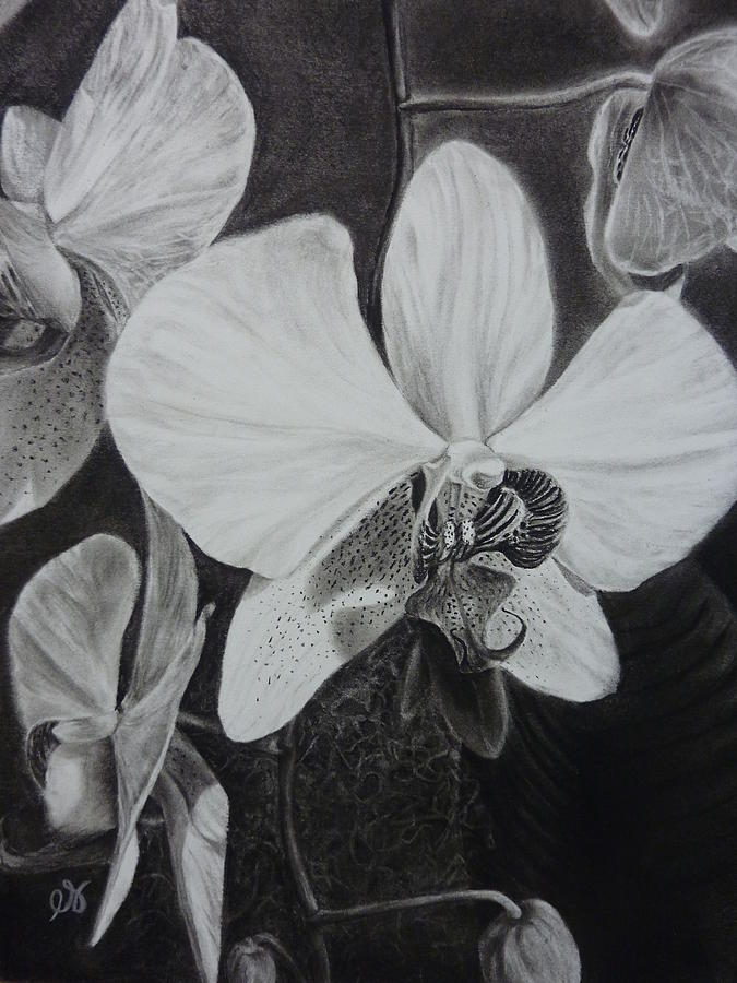 Charcoal Drawing - Cascade Of Orchidds by Estephy Sabin Figueroa