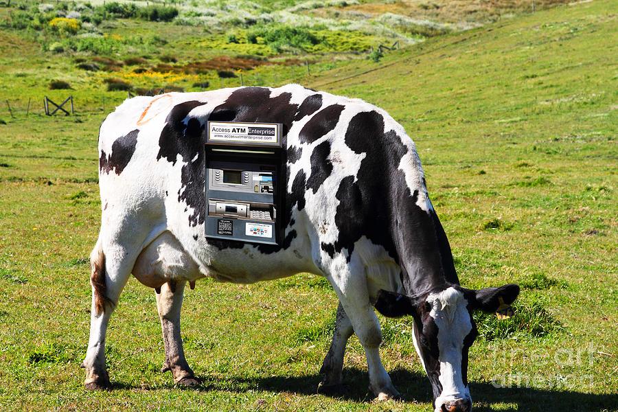 Landscape Photograph - Cash Cow . 7d16140 by Wingsdomain Art and Photography