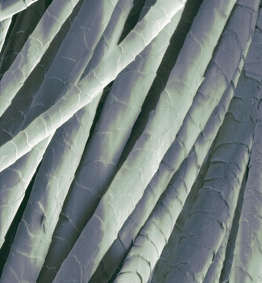 Sem Photograph - Cashmere Wool Fibres, Sem by Steve Gschmeissner