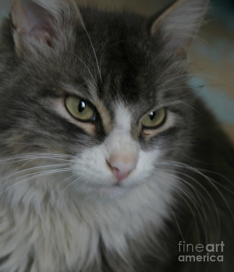 Cat Pyrography - cat by Alisa Tek