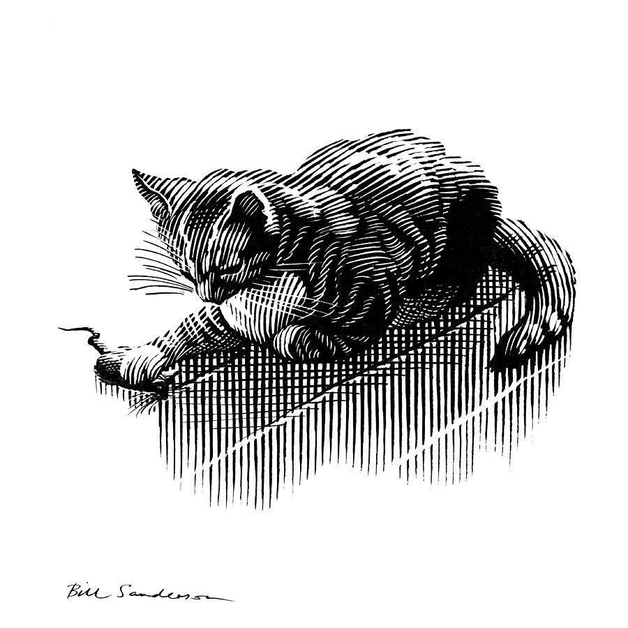 Domestic Cat Photograph - Cat And Mouse, Artwork by Bill Sanderson