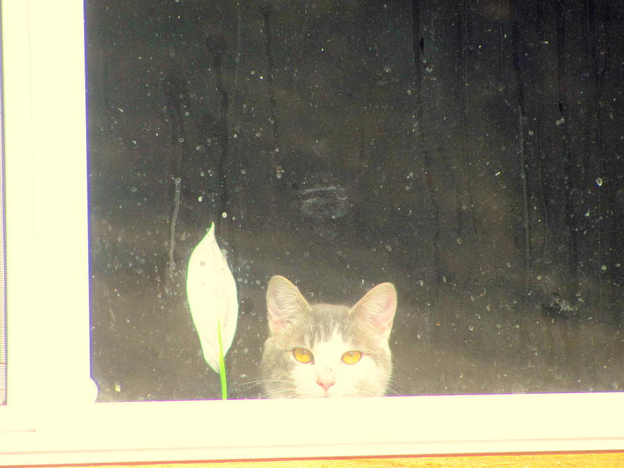 Cat Photograph - Cat and peace Lily in Window by Amy Bradley