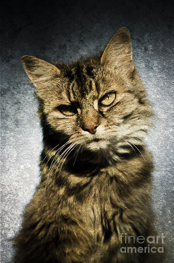 Animal Portrait Photograph - Cat Asks Question by David Lade