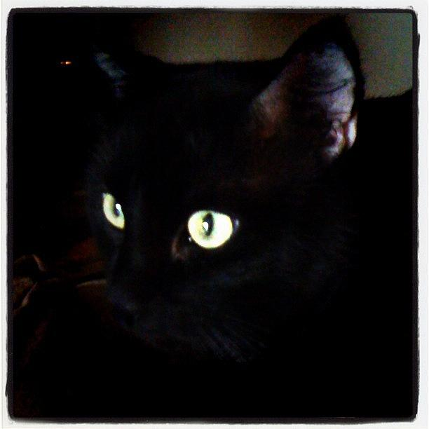 Eyes Photograph - #cat #blackcat #eyes by Jamie H
