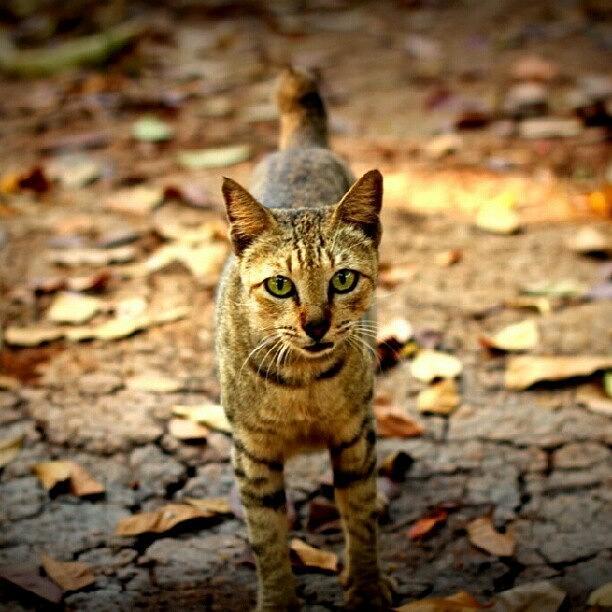 Cute Photograph - #cat #catlovers #instacat #kitty by Fajar Triwahyudi