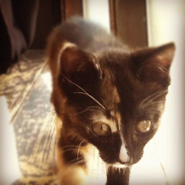 Cute Photograph - #cat #cats #catsagram #catstagram by Kayla St Pierre
