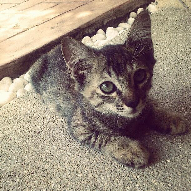 Pussy Photograph - #cat #cats #malaysia #catsagram by Mohd Haikal