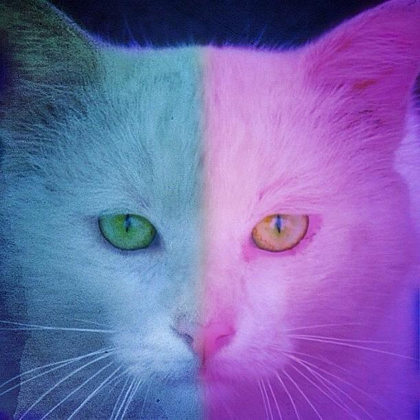 Animal Photograph - #cat #cats #tagsforlikes #catsagram by Murat Karakas