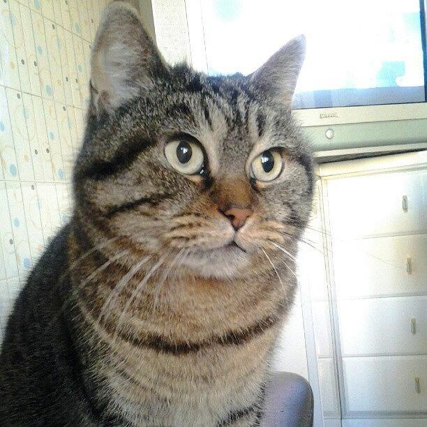 Pussy Photograph - #cat #cats #tagsforlikes.com #catsagram by Pio Travaglio