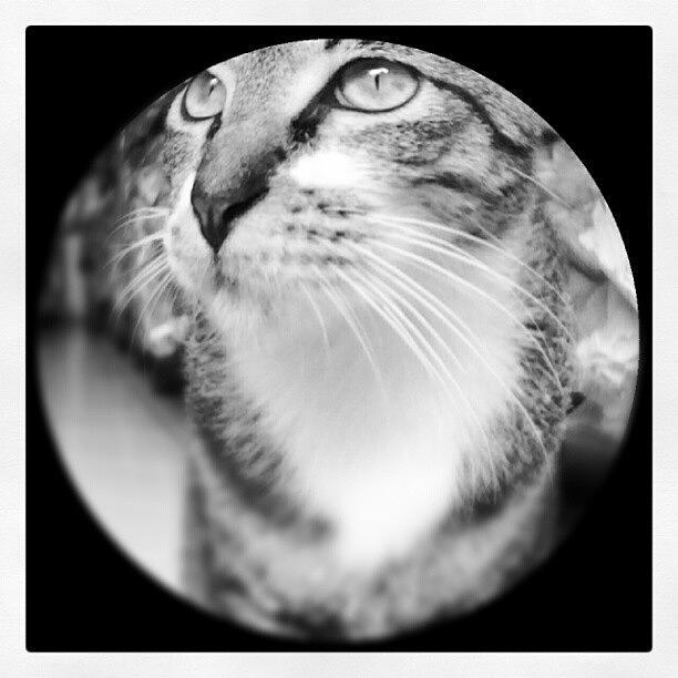 Pussy Photograph - #cat #cats #tagsforlikes.com #catsagram by Zilvia PS