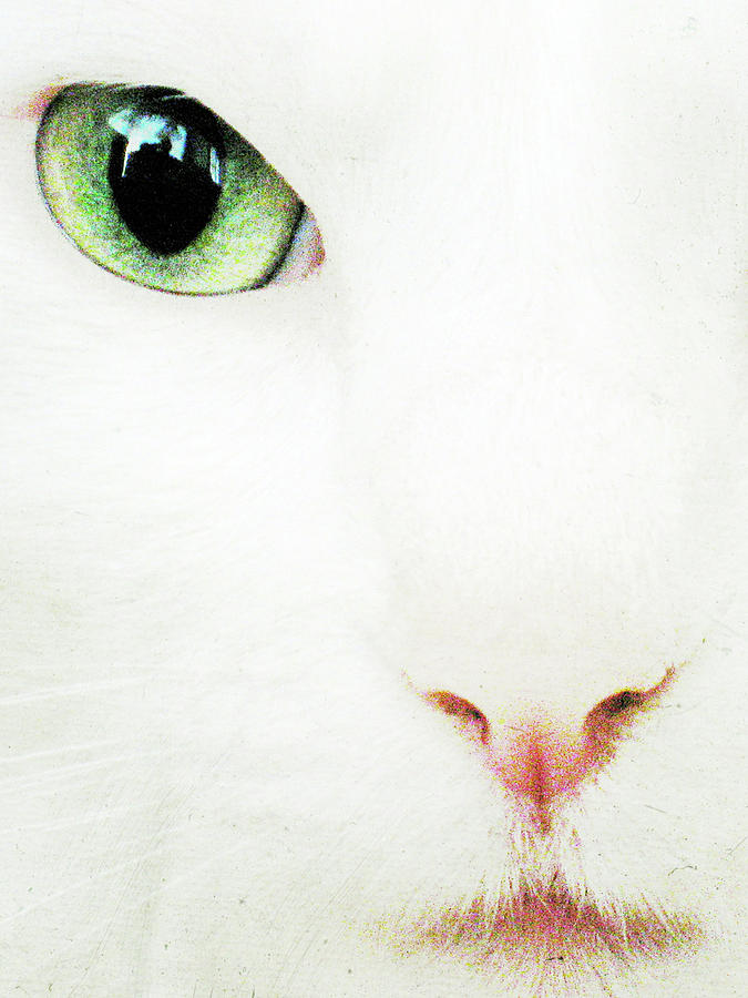 White Photograph - Cat Eye by Julie Niemela