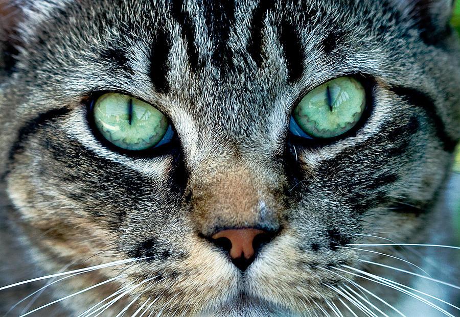 Cat Face Photograph By Jean Noren
