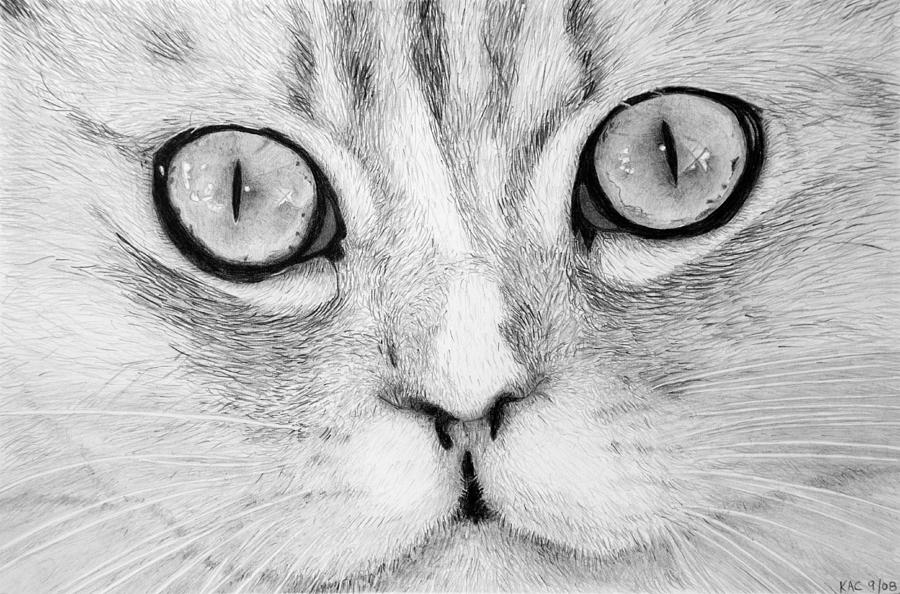 Cat Face Drawing By Kenny Chaffin