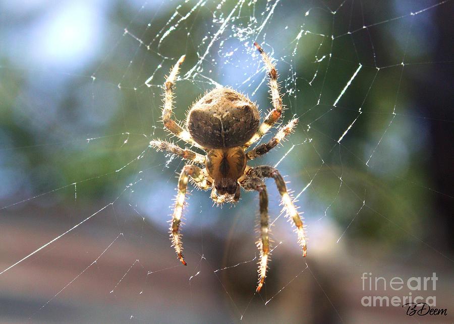 Spider Photograph - Cat Faced Orb Weaver  by Brenda Deem
