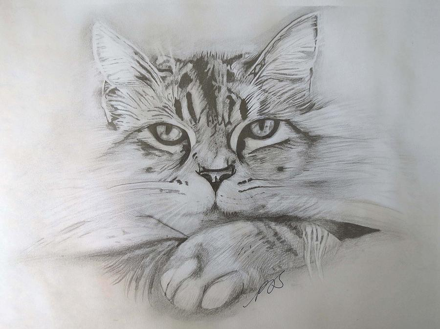 Cat Drawing - Cat I. by Paula Steffensen