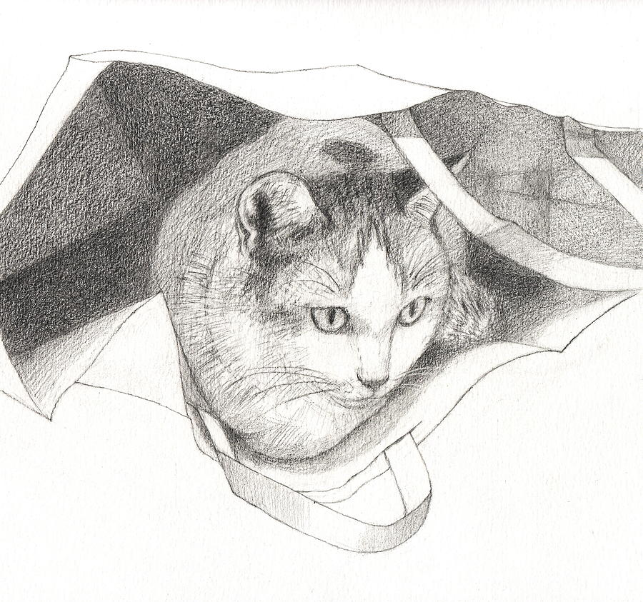 Cat Drawing - Cat In A Bag by Kazumi Whitemoon