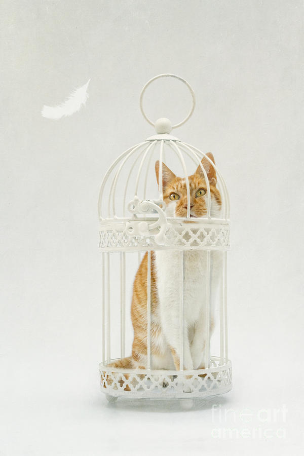 Cat In A Birdcage Photograph by Catherine MacBride