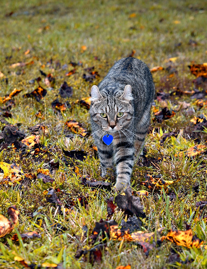 Animal Photograph - Cat In Autumn by Susan Leggett