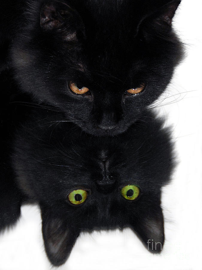 Black Cat Photograph - Cat In The Mirror by Graham Taylor