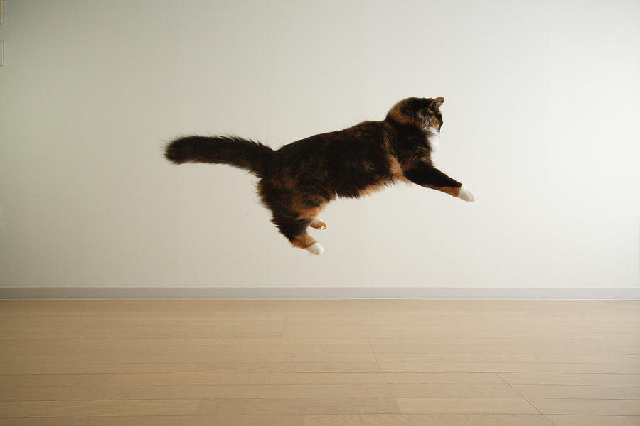 Horizontal Photograph - Cat Jumping In Air by Junku