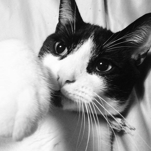 Cat Photograph - Cat Leo by Rachel Williams