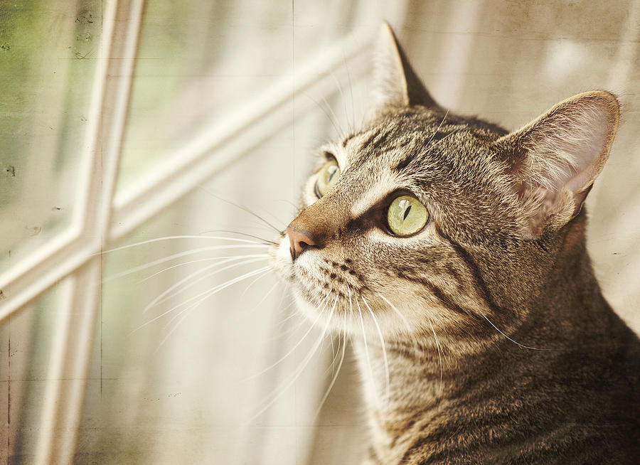Asian print cat looking out window where