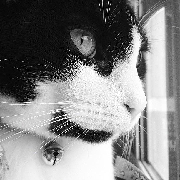 Cat Photograph - Cat looking out window by Rachel Williams
