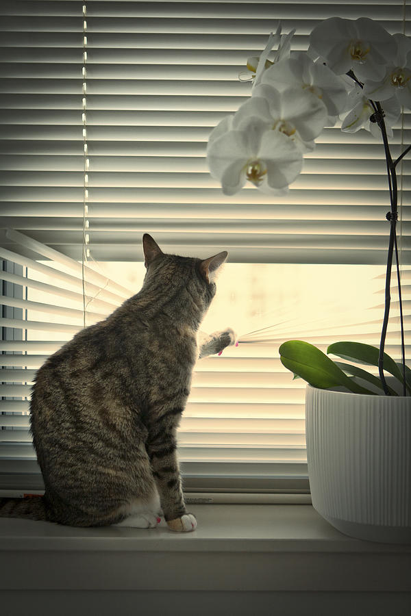 Cat Looking Through Window Photograph By Photography By